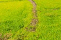 Farming in Thailand Stock Photos