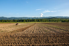 Farming with tractor and plow in field with mountain Papuk in th Royalty Free Stock Image
