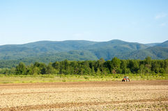 Farming with tractor and plow in field with mountain Papuk in th. E background, Croatia Stock Photos