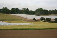 Farming under plastic Royalty Free Stock Image