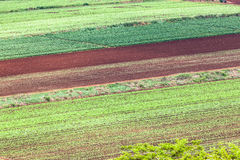 Farming Vegetables Crops Royalty Free Stock Images