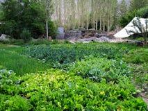 Farming Vegetables Royalty Free Stock Image