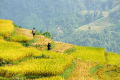Farming Vietnam Stock Photo