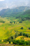 Farming Vietnam. Rice terraces, farming in valley. Sapa, Vietnam Royalty Free Stock Image