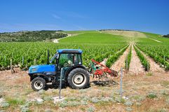 Farming vineyards Croatia Stock Images
