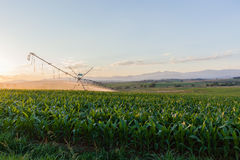 Farming Water Sprinklers Crops Royalty Free Stock Photos