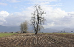 Farming Winter Landscape Royalty Free Stock Photo
