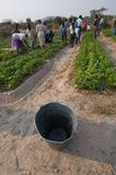 Farming in Zimbabwe Stock Image