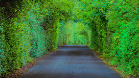 Farmington Plantation Wooded Lane, Louisville Kentucky royalty free stock photography