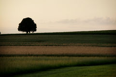 Farmland. With tree in background Royalty Free Stock Photos