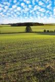 Farmland. It is a Farmland panorama Stock Image