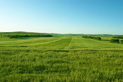 Farmland. Arable farmland in the northern China Royalty Free Stock Photography