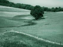 Farmland. Pennsylvania farmland, green toned Royalty Free Stock Image