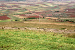 Farmland. Flat agricultural surround. Shot in Yunnan of China Royalty Free Stock Photos