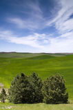 Farmland Rolling Hills Blue Sky Palouse Washington Stock Photography