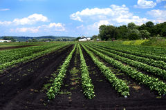Farmland Royalty Free Stock Photography