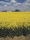 Farmland. Clouds trees ploughed earth soil agriculture oil seed rape Royalty Free Stock Images