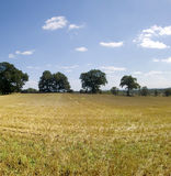 Farmland. Empty cornfield after harvesting of arable crops Royalty Free Stock Image