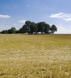 Farmland. Empty cornfield after harvesting of arable crops Royalty Free Stock Photos