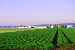 Farmland. With barns and rows of crops Stock Image