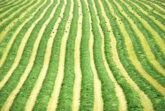 Farmland. Royalty Free Stock Image