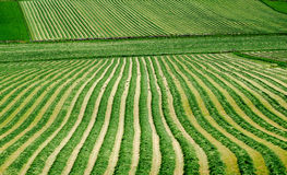 Farmland. Arable farm with recently cut grass for animal feed Royalty Free Stock Image