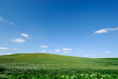 Farmland. Green grass at agricultural farmland Royalty Free Stock Photo