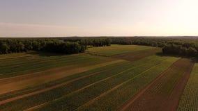 Farmland Aerial. V6 Flying low over farmland panning stock footage