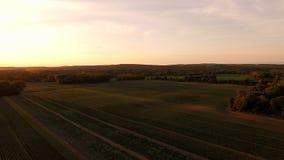 Farmland Aerial. V4 Flying low over farmland panning at sunrise stock footage