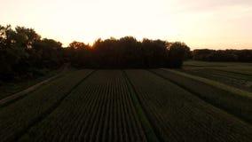Farmland Aerial. V3 Flying low over farmland at sunrise stock video footage