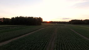 Farmland Aerial. V2 Flying low over farmland at sunrise stock footage