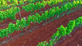 Farmland from air - vineyard stock video footage