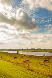Farmland alongside the Dutch river IJssel Stock Photos