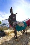 Farmland And  Donkey