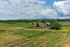 Farmland Asia. With Young plant at agriculture stock photo