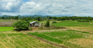 Farmland Asia. With Young plant at agriculture stock photos