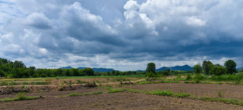 Farmland. Asia with Young plant at agriculture Stock Images