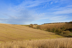 Farmland in autumn. Sweeping straw stubble fields and dry grass in an autumn farming landscape in the yorkshire wolds under a blue sky with white wispy cloud Stock Photo