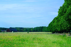 Farmland and avenue. A pasture field near an old farm in Southern Sweden and an avenue of hundred-years-old trees guarding a way to the farm Royalty Free Stock Photos
