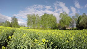 Farmland  with barn and rapesedd field with clouds. Timelapse 4K stock video footage