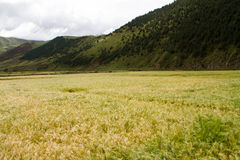 Farmland Stock Photography