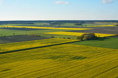 Farmland with canola flowers on the island Gotland Sweden Royalty Free Stock Photos