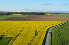 Farmland with blooming Canola, Campestris L during Spring, Aerial view Stock Image