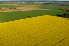 Farmland with blooming Canola, Campestris L during Spring, Aerial view Stock Images