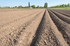 Farmland with converging potato ridges Royalty Free Stock Image