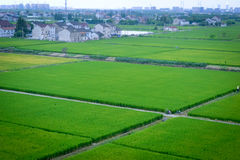 Farmland of countryside. Countryside green farmland closeup in Fengxian Town, Shanghai, China Royalty Free Stock Photography