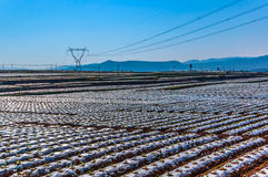 A Farmland is covered by plastic sheets to keep the moisture for the seedling. At Red Land, Dongchuan, Kunming, Yunnan, China. stock images
