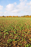 Farmland Crops Stock Photos