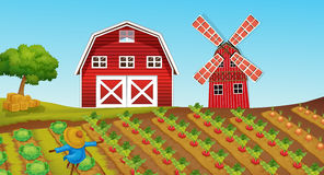 Farmland with crops on the farm Stock Image