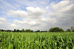 Farmland Crops Stock Photography